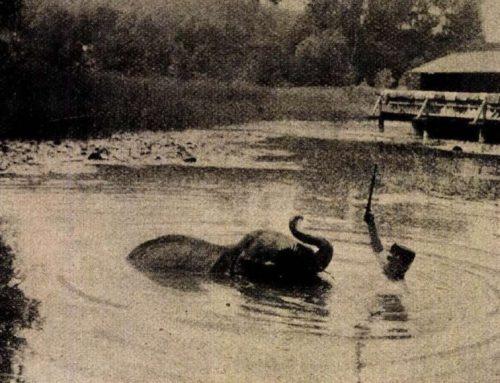 HEVIZ Heilwasser hat einem Schauspielerhund und einem Elefanten geholfen.